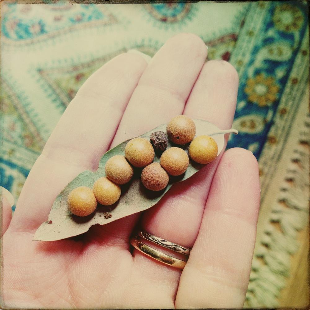 oak leaf with berries.JPG
