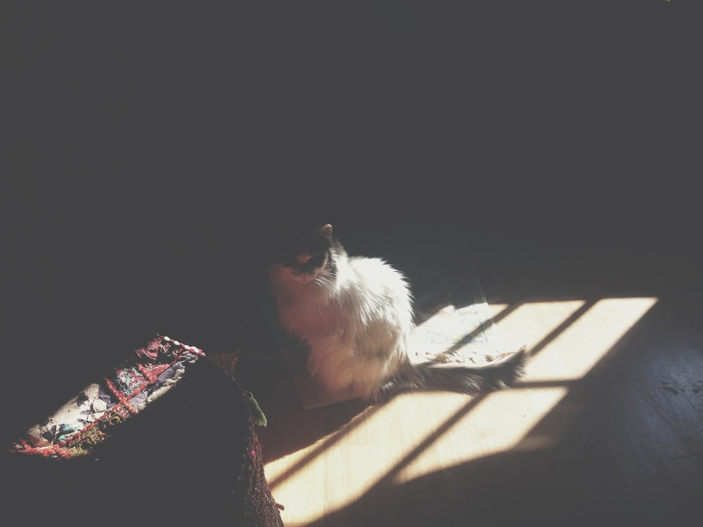 My Bella.  Finding a moment of light.  She has been under the weather this whole week.  Changing her medications has left her with little appetite and alot of sleep.  Its been hard to watch... so this moment made my heart so happy.