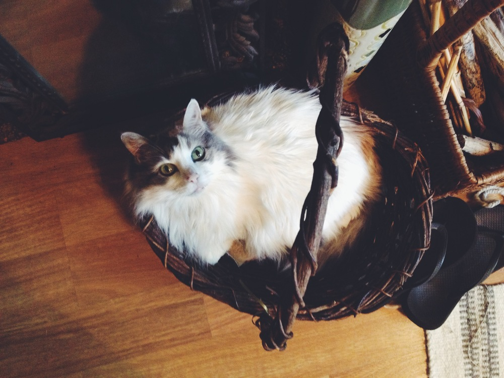 Bella being oh so helpful in the studio by lounging away in a basket...