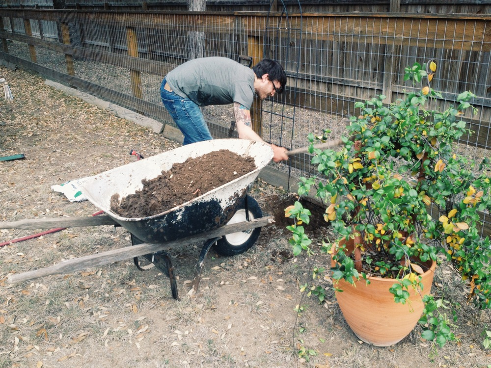 James planting our Jasmine bush
