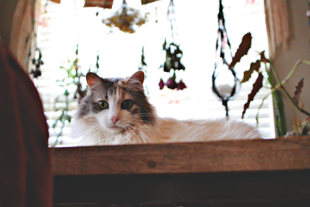 Bella via rootsandfeathers.com