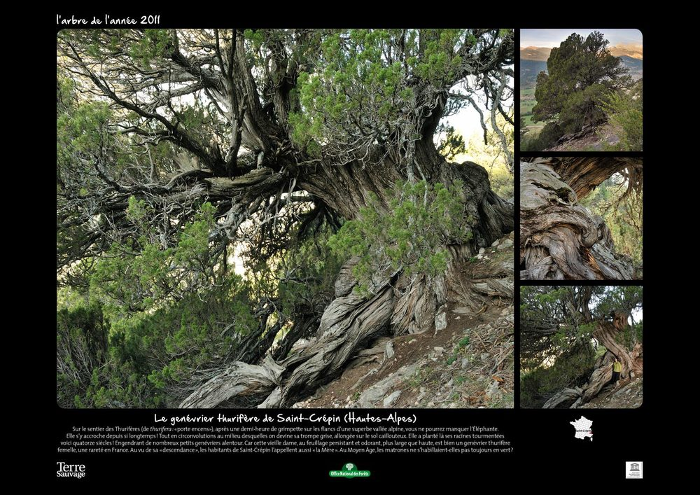 Nature-sauvage-l'Arbre.jpg