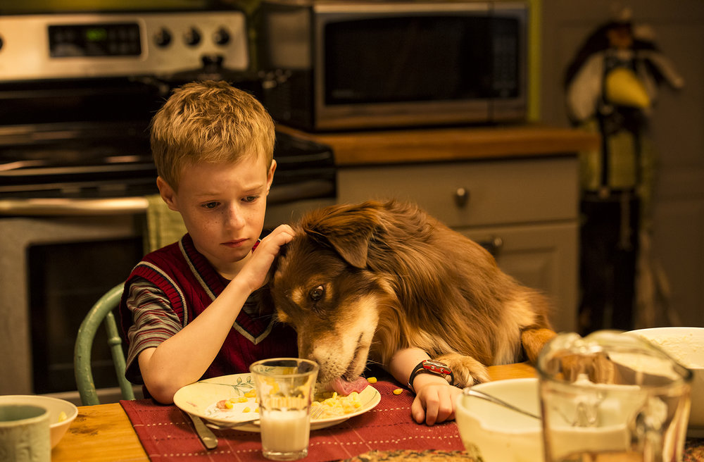 """The Selected Works of T.S.Spivet""   Day 42