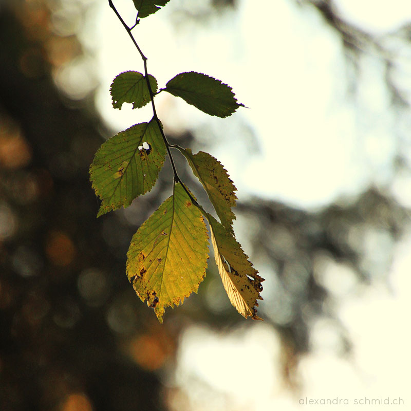 CHANGING LEAF © by Alexandra Schmid