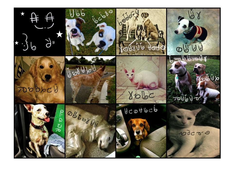 Deaf Dog-Cat Collage.001.png