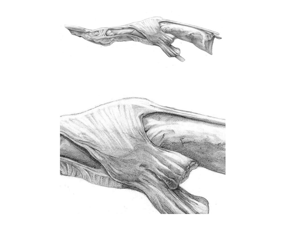 Tendões do polegar