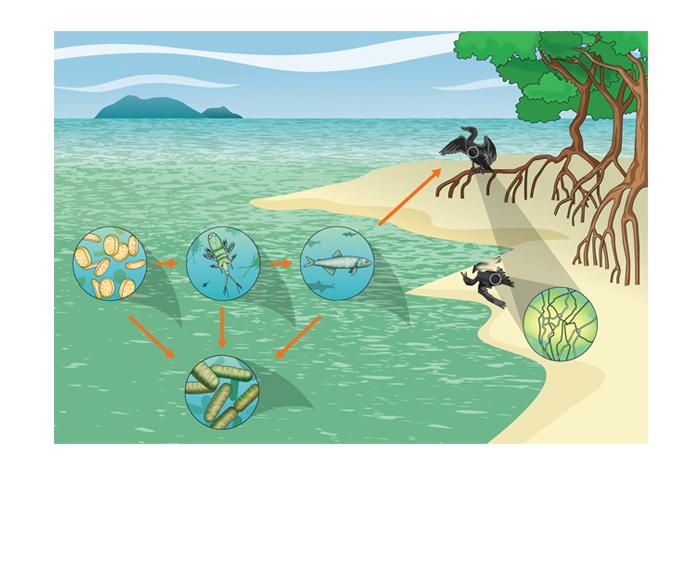 Cadeia alimentar no mar