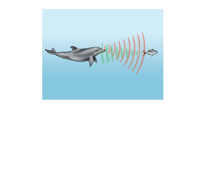 Sonar dos golfinhos