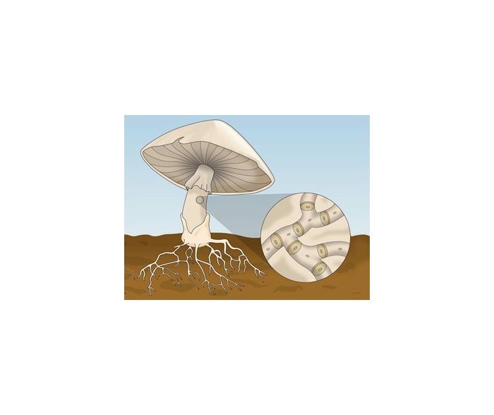 Estrutura dos fungos