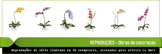 orquidofolia-reproducao.png