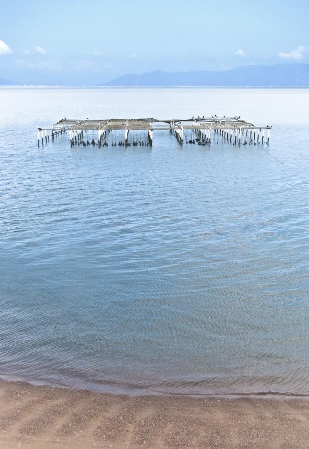 oyster-rack.jpg