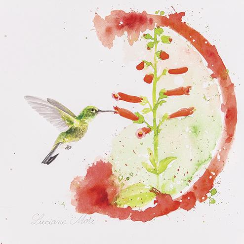 5. Amazilia fimbriata & Sinningia elatior