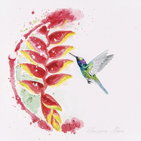 11. UNAVAILABLE        - Colibri serrirostris & Heliconia rostrata