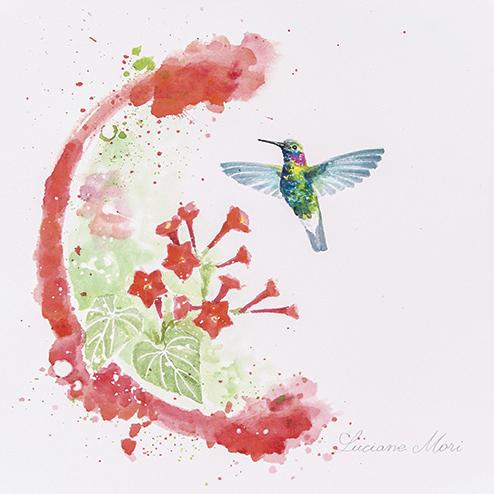 12. Colibri serrirostris & Ipomoea indivisia