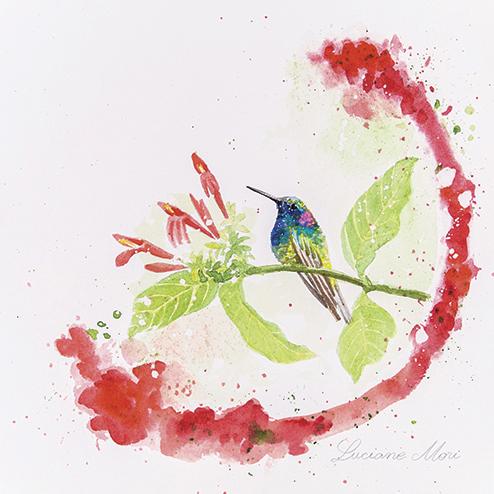 13. Colibri serrirostris & Justicia brasiliana