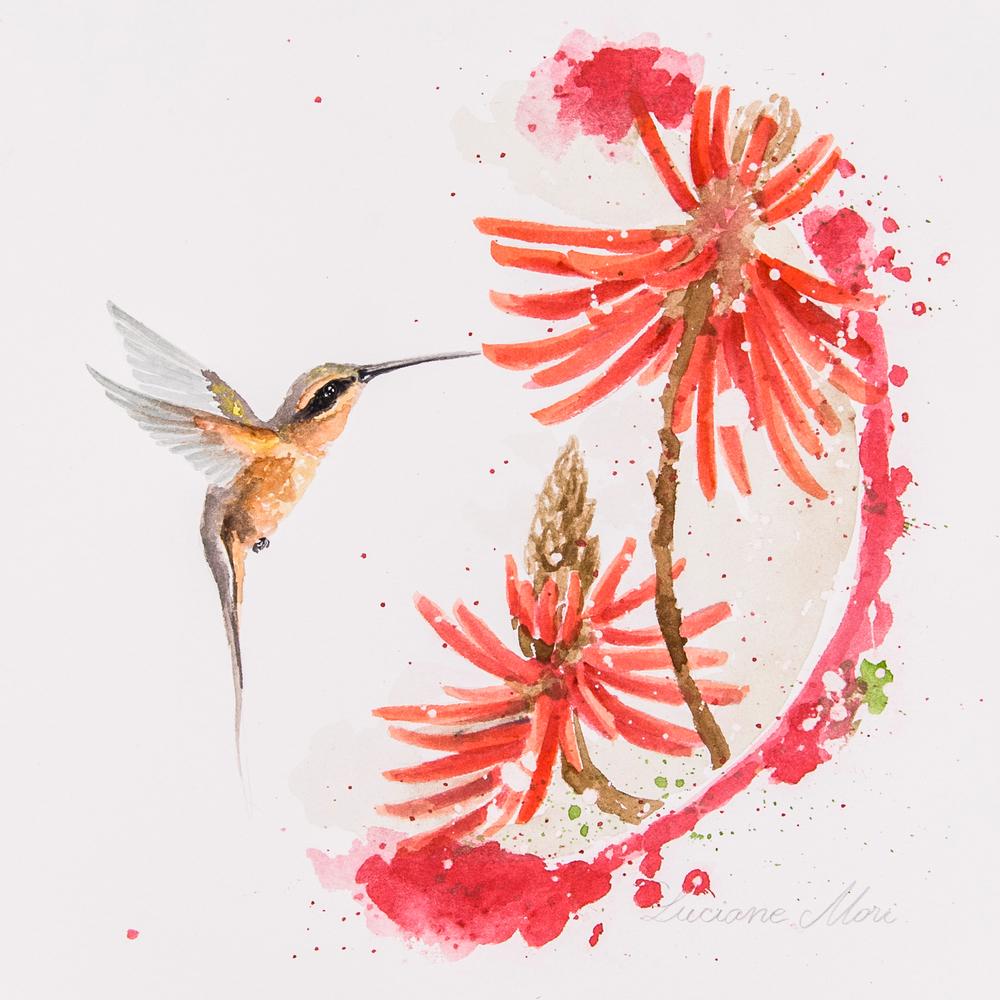 8. Phaethornis pretrei & Erythrina speciosa