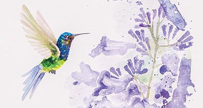 hummingbirds-watercolor-Santa-Fe-NM-brazilian-LU-MORI-3.jpg