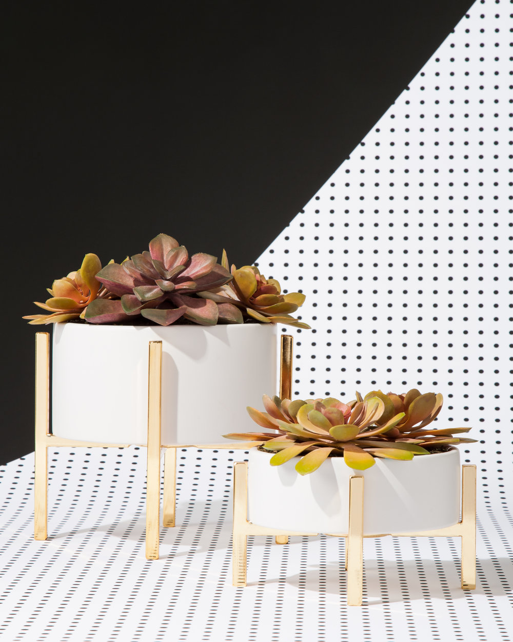 These Threshold  #Succulents will put the bloom in your room.