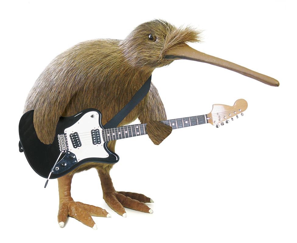 kiwi guitarist illustration.jpg