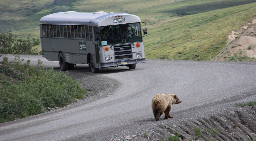 Yes the bears do own the road here.