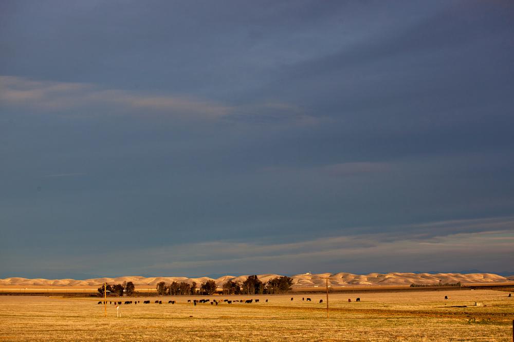 Light on the Plain, Highway 41 CA