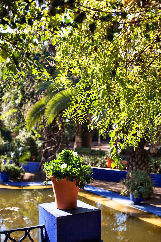 Jardin_9.jpg