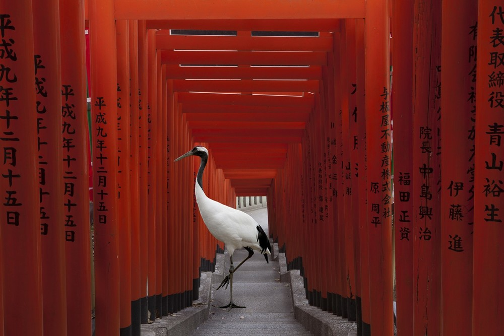 Karen Knorr, The Journey, Hie Torii, Tokyo, Monogatari, 2015 Courtesy of the artist & Galerie Les Filles du Calvaire, Paris