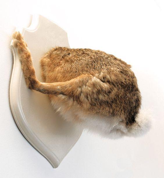 Bertholon  /  Troché lapin