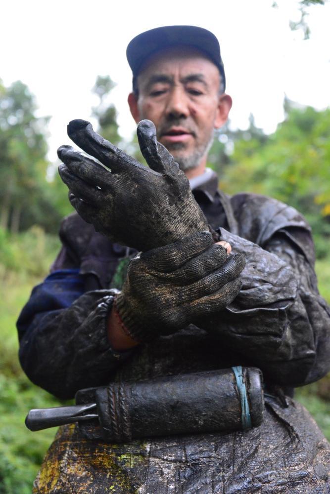 Yu Zhongding, collecteur de laque depuis 38 ans dans la province de Guizhou