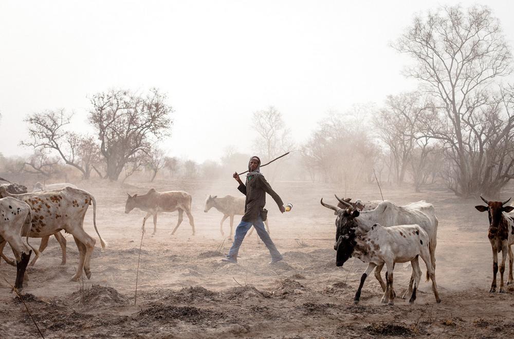 Gilles Coulon -  Campement de Ganaga, Togo.Transhumance pastorale, Burkina- Faso-Togo . Le 22/02/2016
