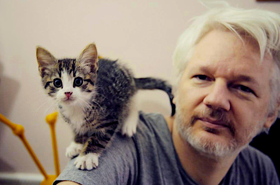 Assange-with-cat-1.jpg