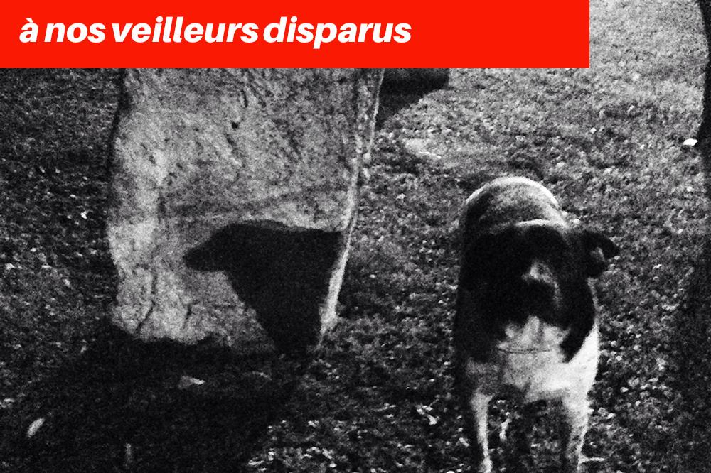 Où sont les chiens de Sarajevo ? par Tieri Briet -