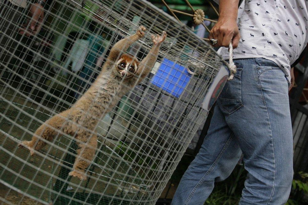 Le trafic illicite d'espèces sauvages prospère sur internet -