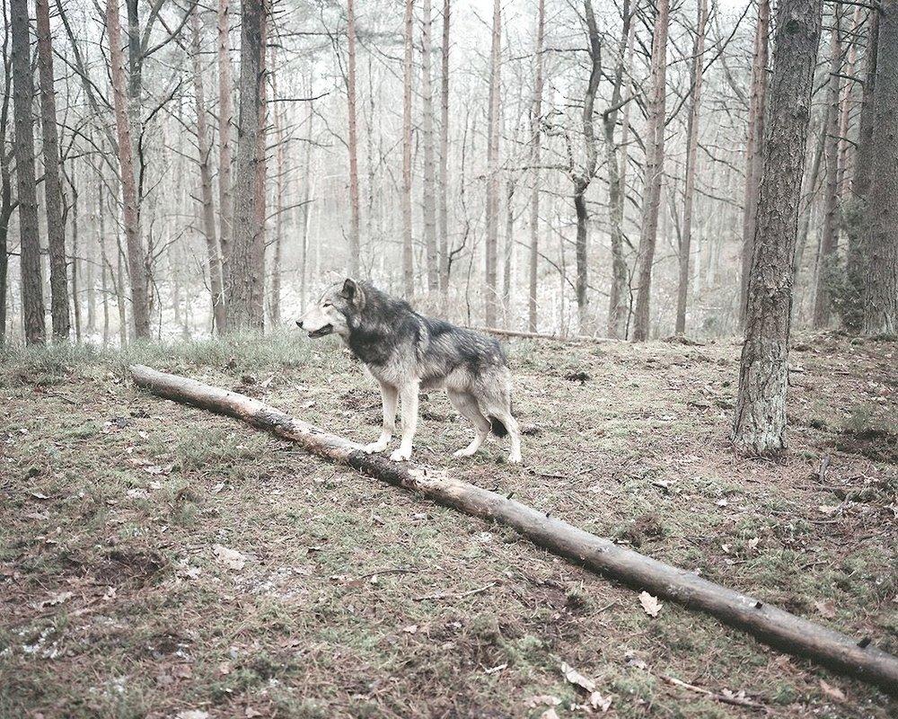 """L'éphéméride du 6 mars - Haïku + Mount Kimbie + proverbe + Jean Cocteau + Marta Berens. Et un proverbe suédois pour vous encourager à tailler votre route aujourd'hui : """"Celui qui marche sur les traces des autres ne peut jamais arriver premier."""""""