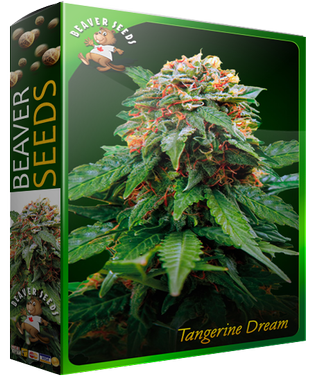 Tangerine-Dream-1.png