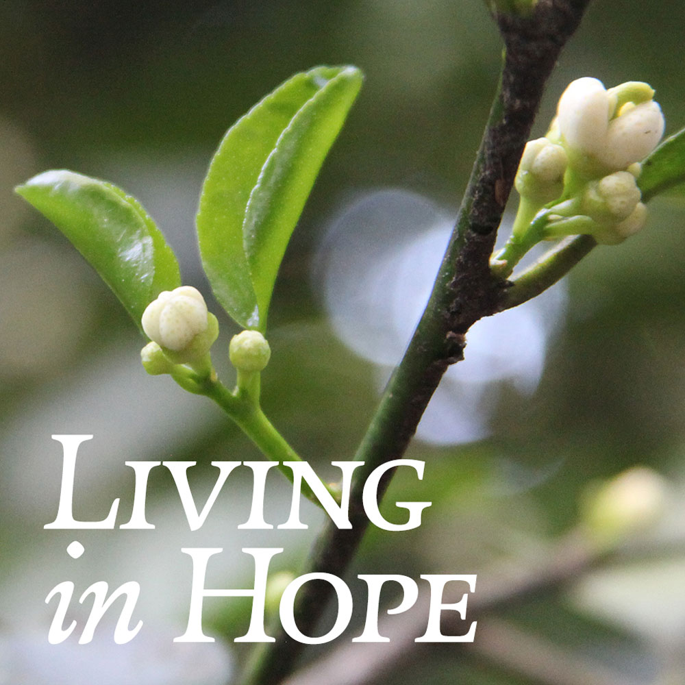 21-living-in-hope.jpg