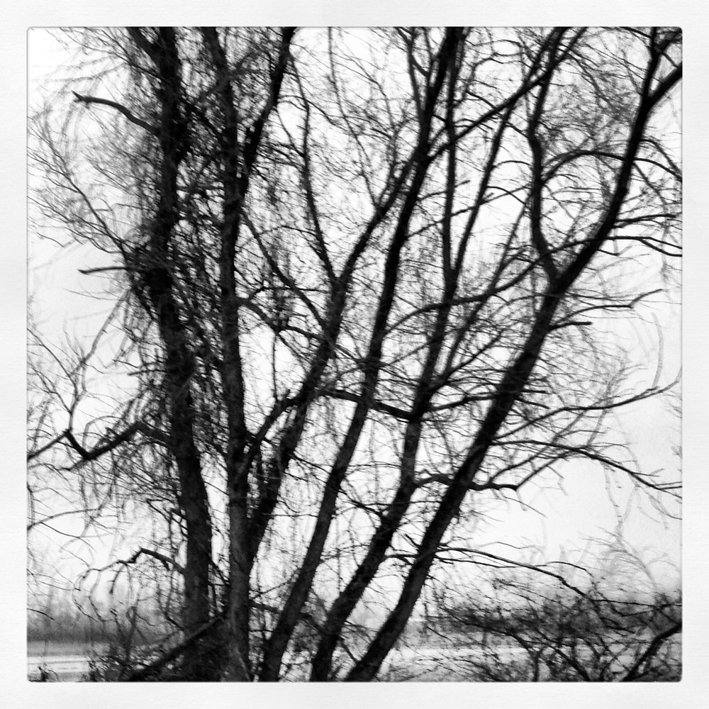 delayed spring 2