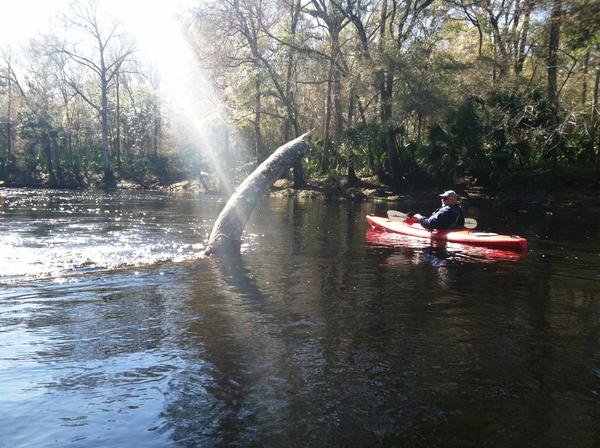 Light from above greets Edwin McCook of the Suwannee River Water Management District  Credit Steve Newborn / WUSF News