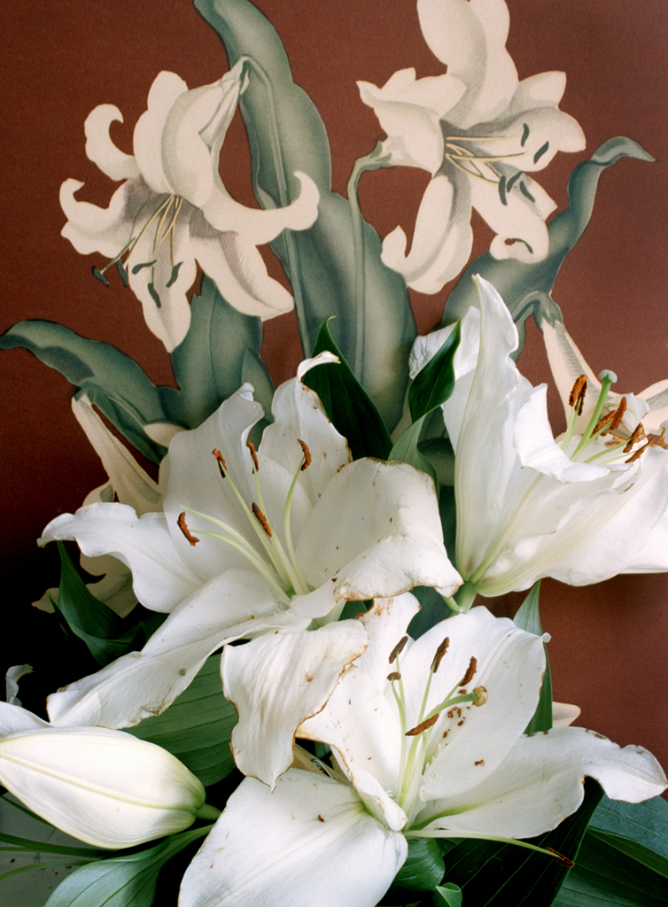 Lilies, 28x38in, C-Print, 2011