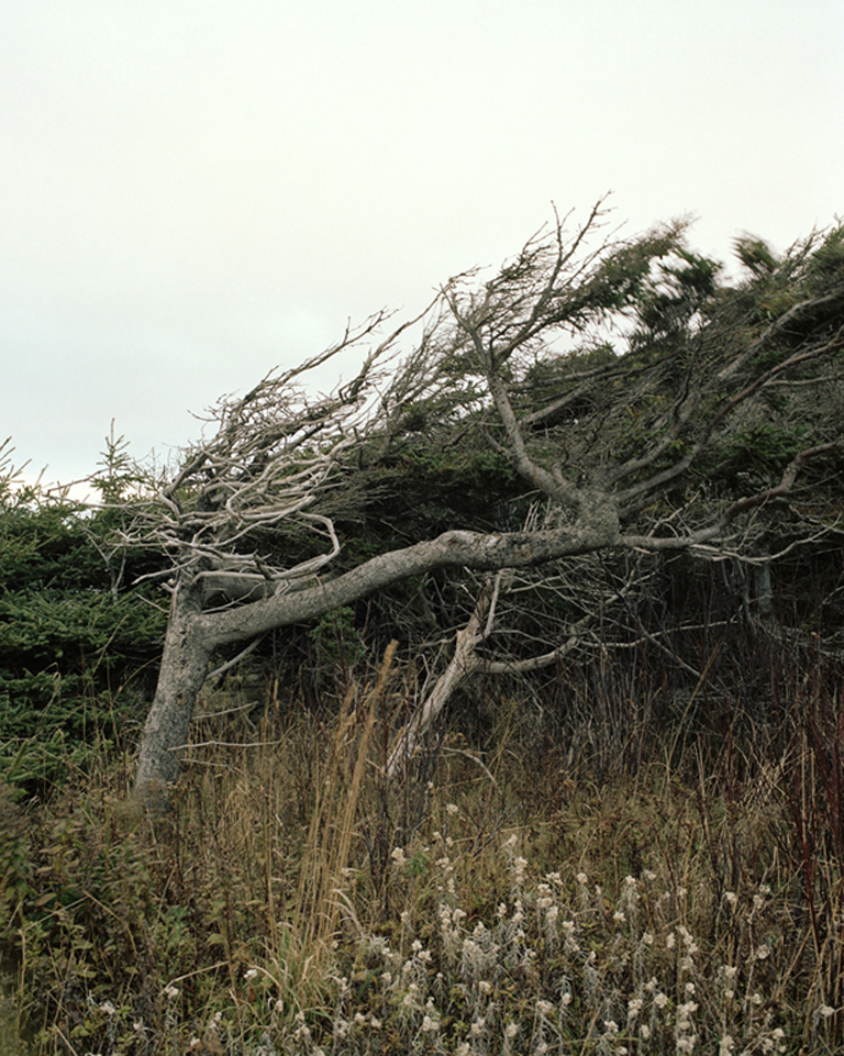 Trees for the Wind,  40x50in, C-Print, 2009