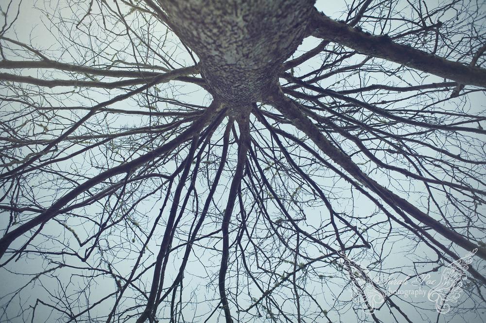 sarahpoephotography.forest.1.jpg
