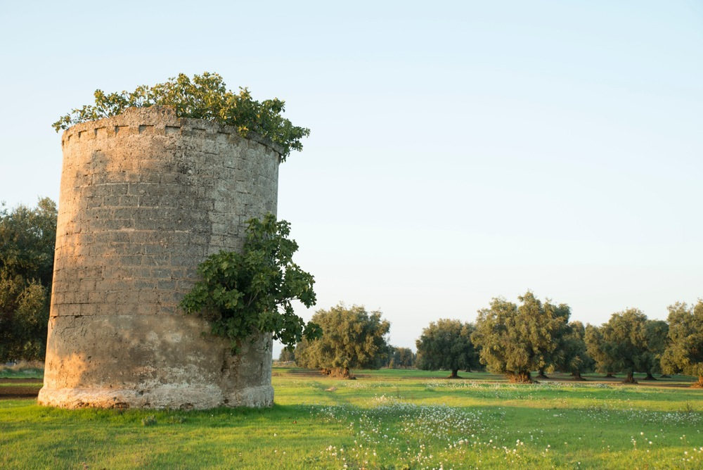 An abandoned palummaru (dovecote) outside Carosino. Photo by Vincenzo Cuomo.