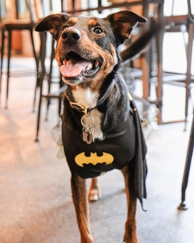 "Does your pooch need a night out? We think so. Tomorrow is our ""Howl-O-Ween"" costume contest. Come on out to celebrate and let your doggy strut their stuff. More details in the link in our bio!"
