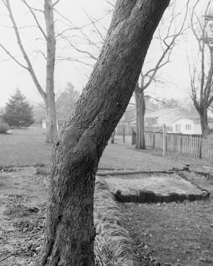 tree_01b_tim.jpg