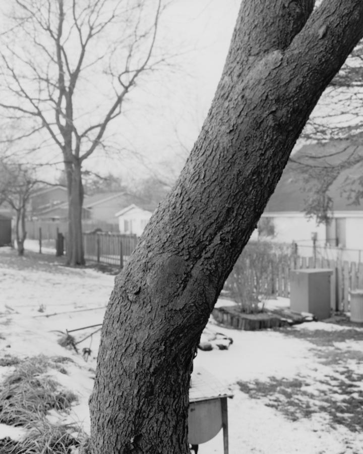 tree_08_tim.jpg