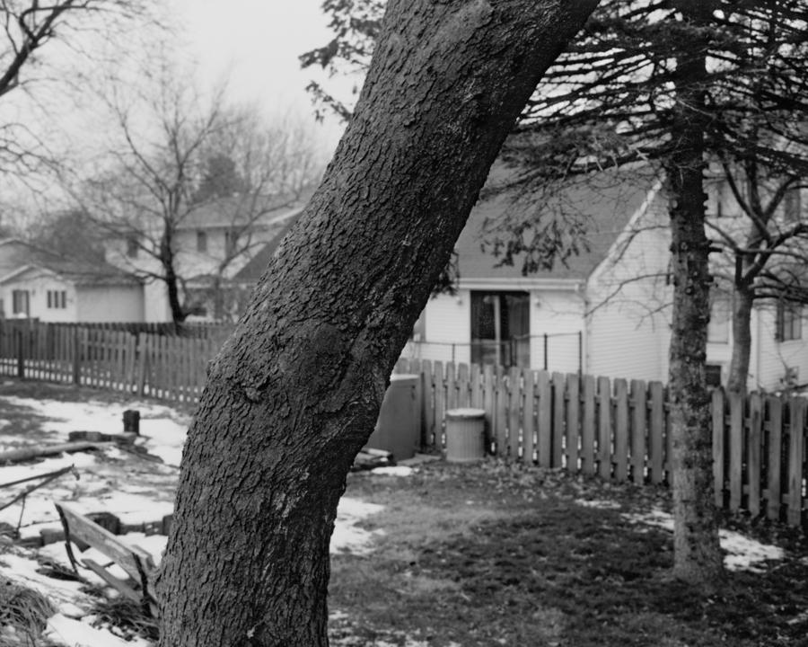 tree_09_tim.jpg