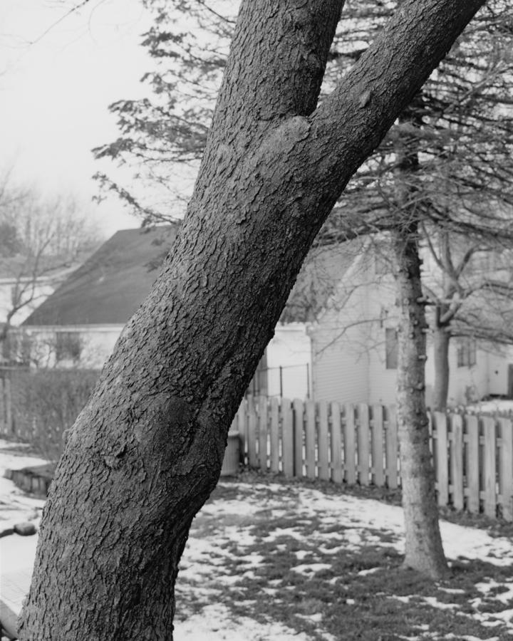 tree_10_tim.jpg