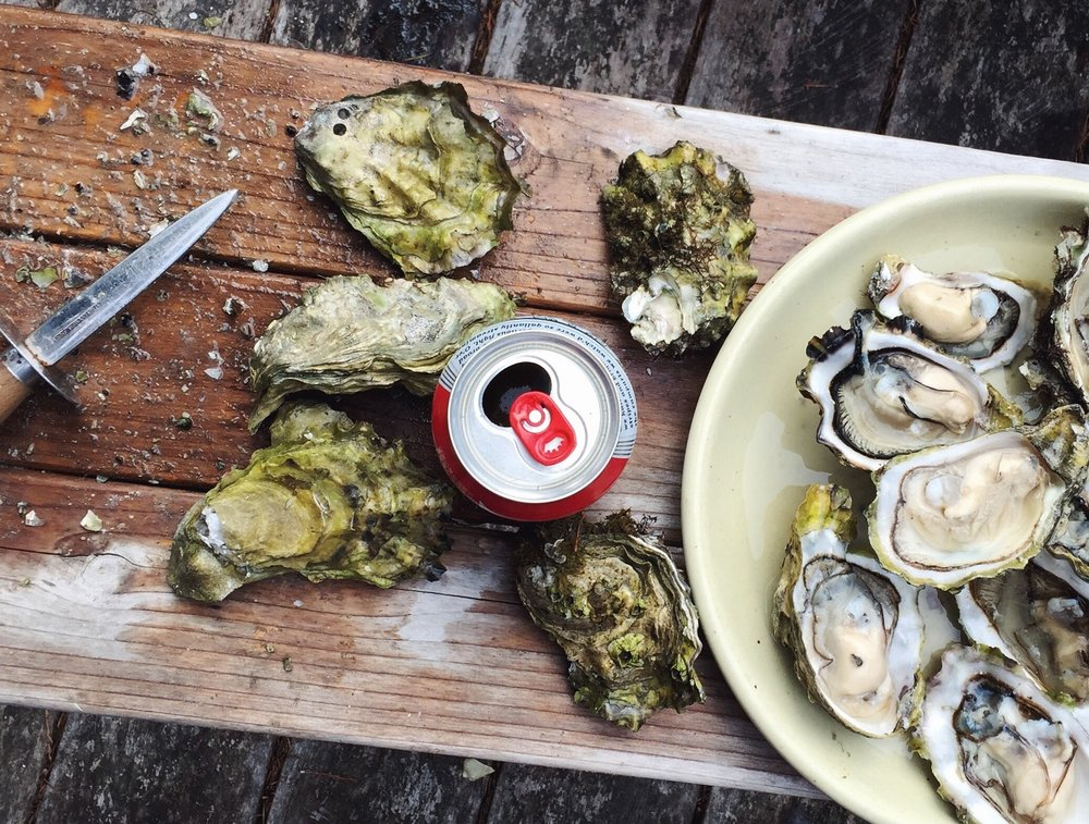 Shucking oysters and a can of beer