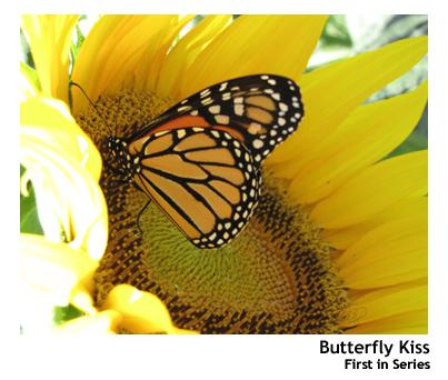 monarch001.jpg