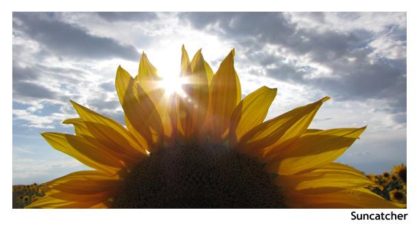 suncatcher.jpg